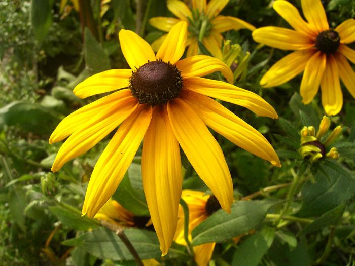 Мамин сад – цветочный калейдоскоп