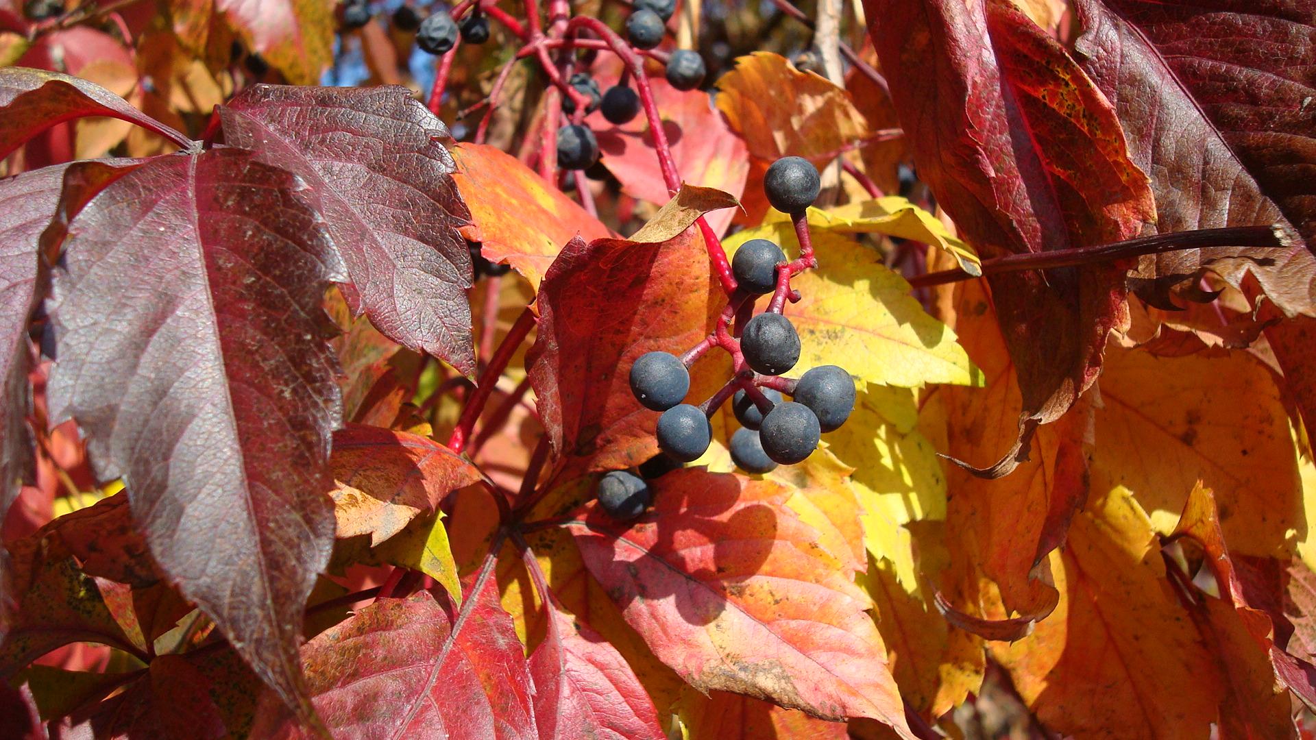 Времена года: Осень | Уроки астрономии