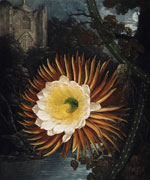 Цереус (Night-Blooming Cereus), Филипп Рейнегл, 1799 г.