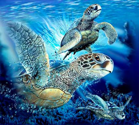 Морские черепахи (9) :: картина-загадка :: Стивен Гарднер