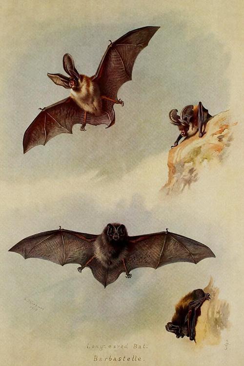 Картинки природы которые приводятся в движение мышкой