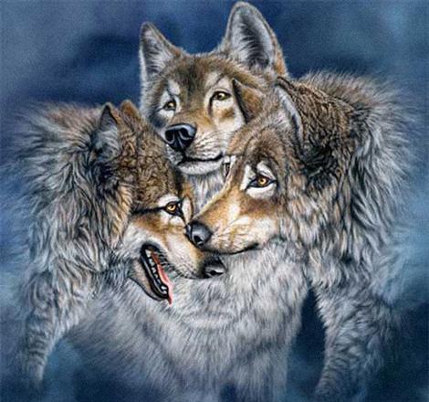 Волки :: картина-загадка :: Стивен Гарднер